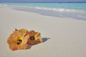 Maldives beach hibiscus flowers print