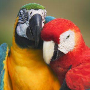 Macaws greetings card